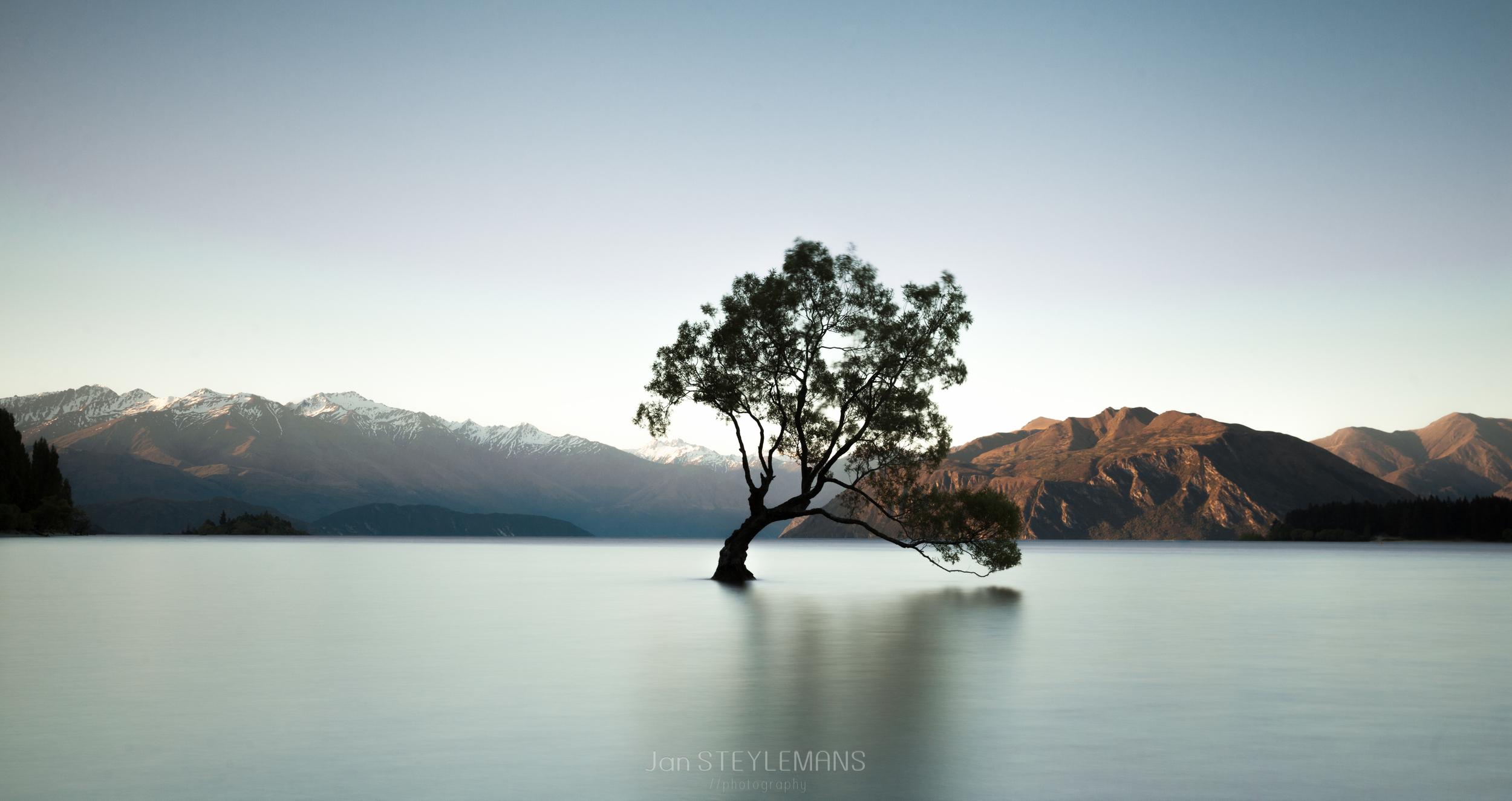 The Wanaka tree, Wanaka, New Zealand