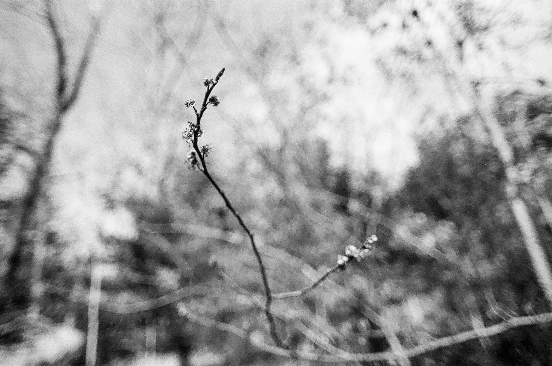 35mm046.jpg