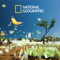 Content Production  //   National Geographic