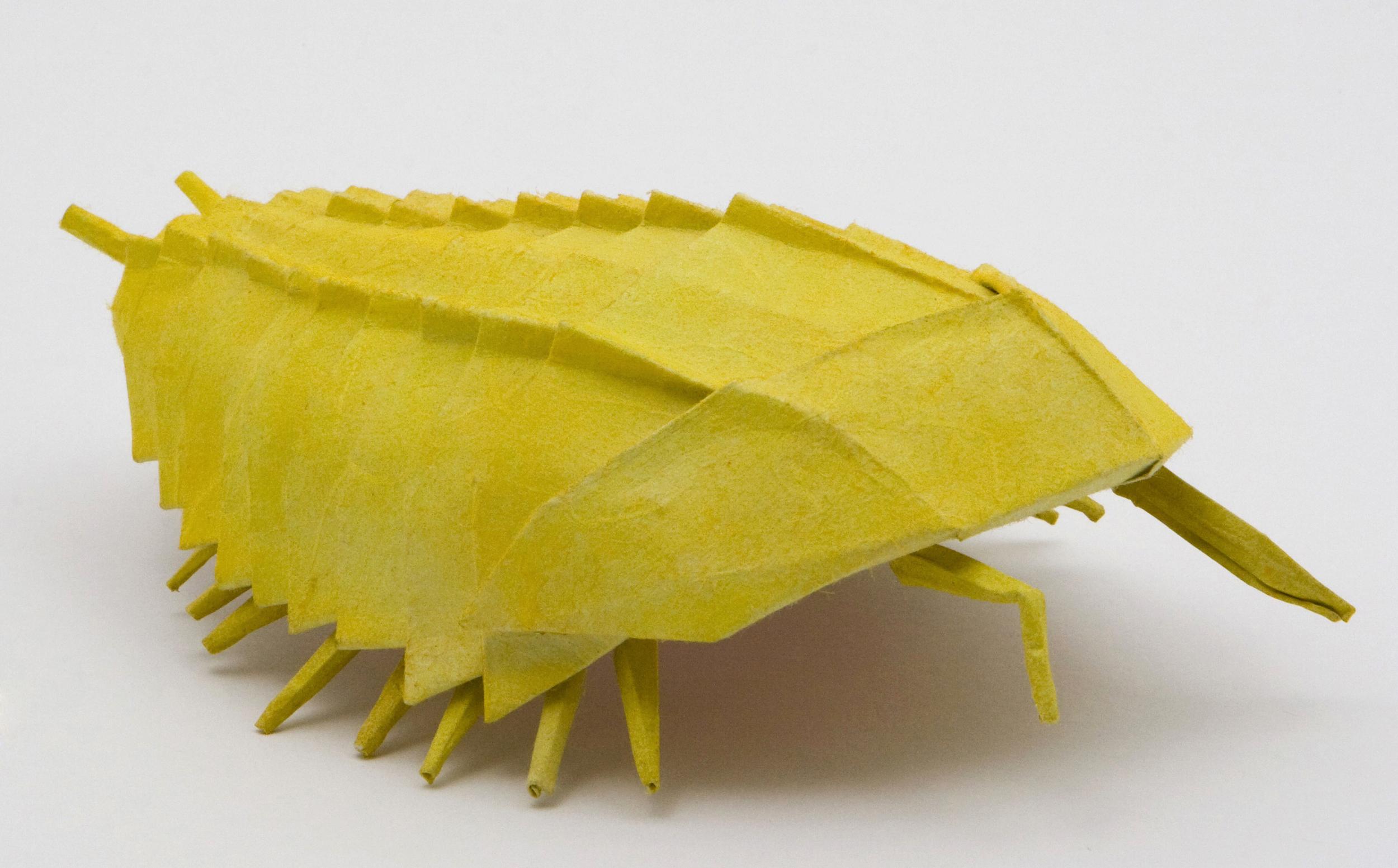 origami_trilobite.jpg