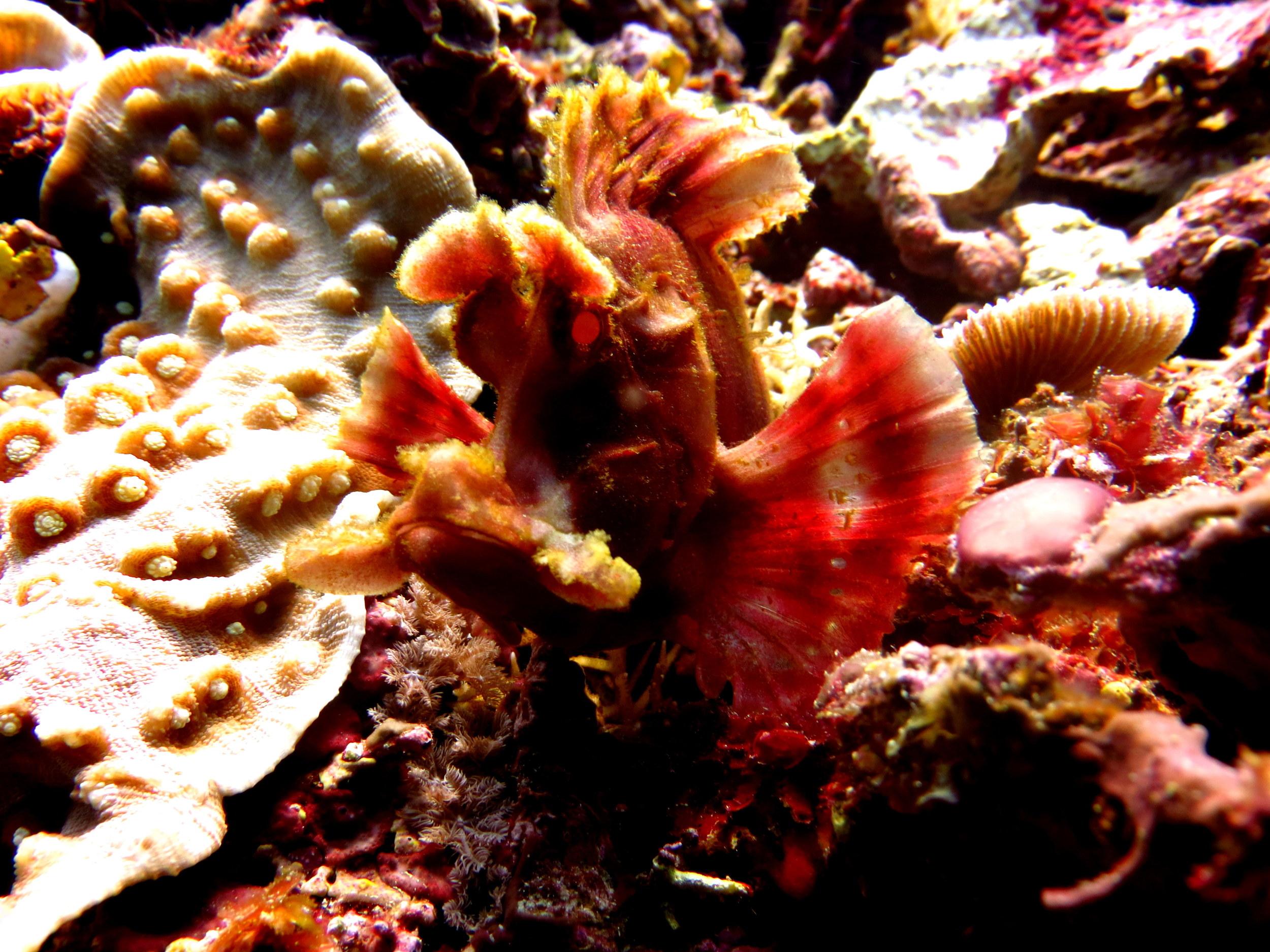 rhinopia.diving.gilit.scuba.indonesia