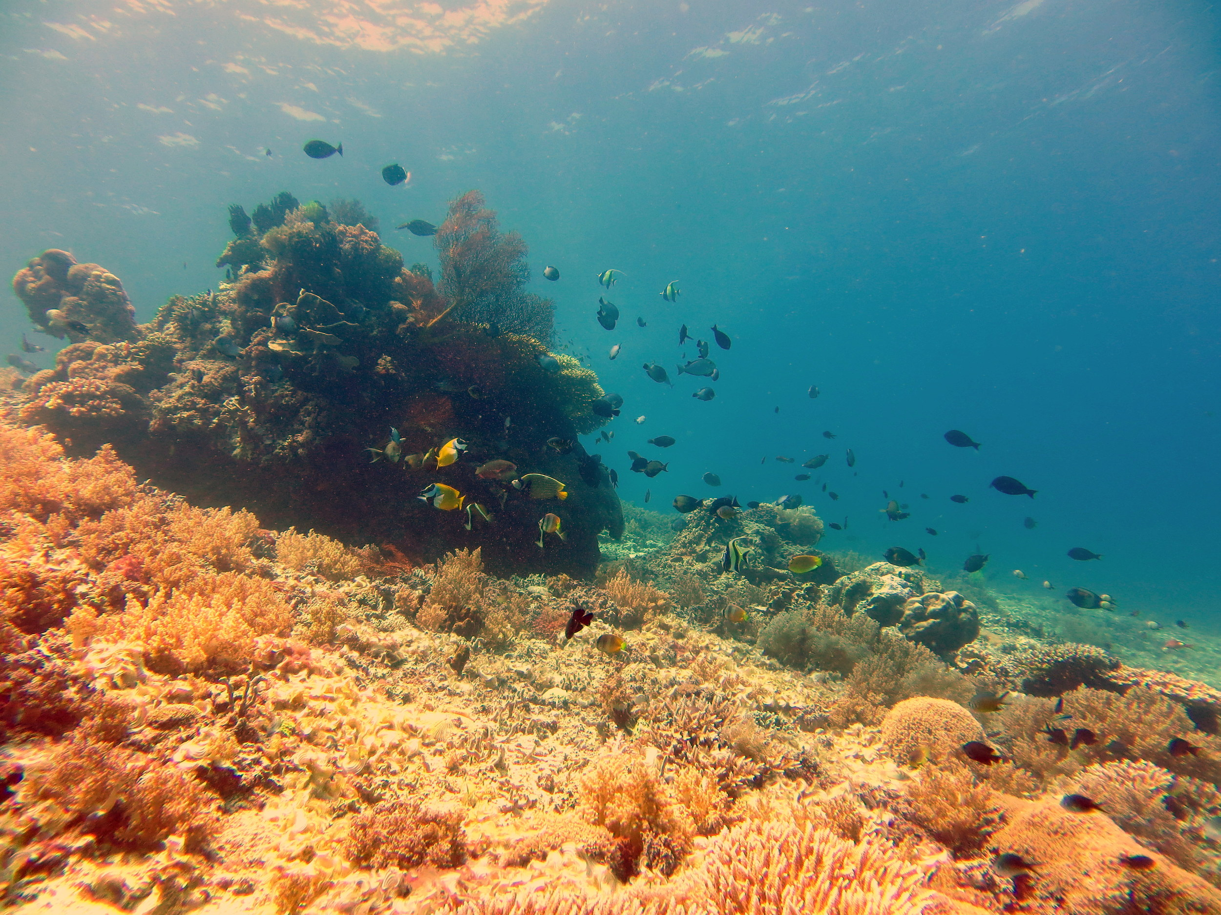 This beautiful dive site is 10 meters deep, the coral are beautiful and the marine life is great.