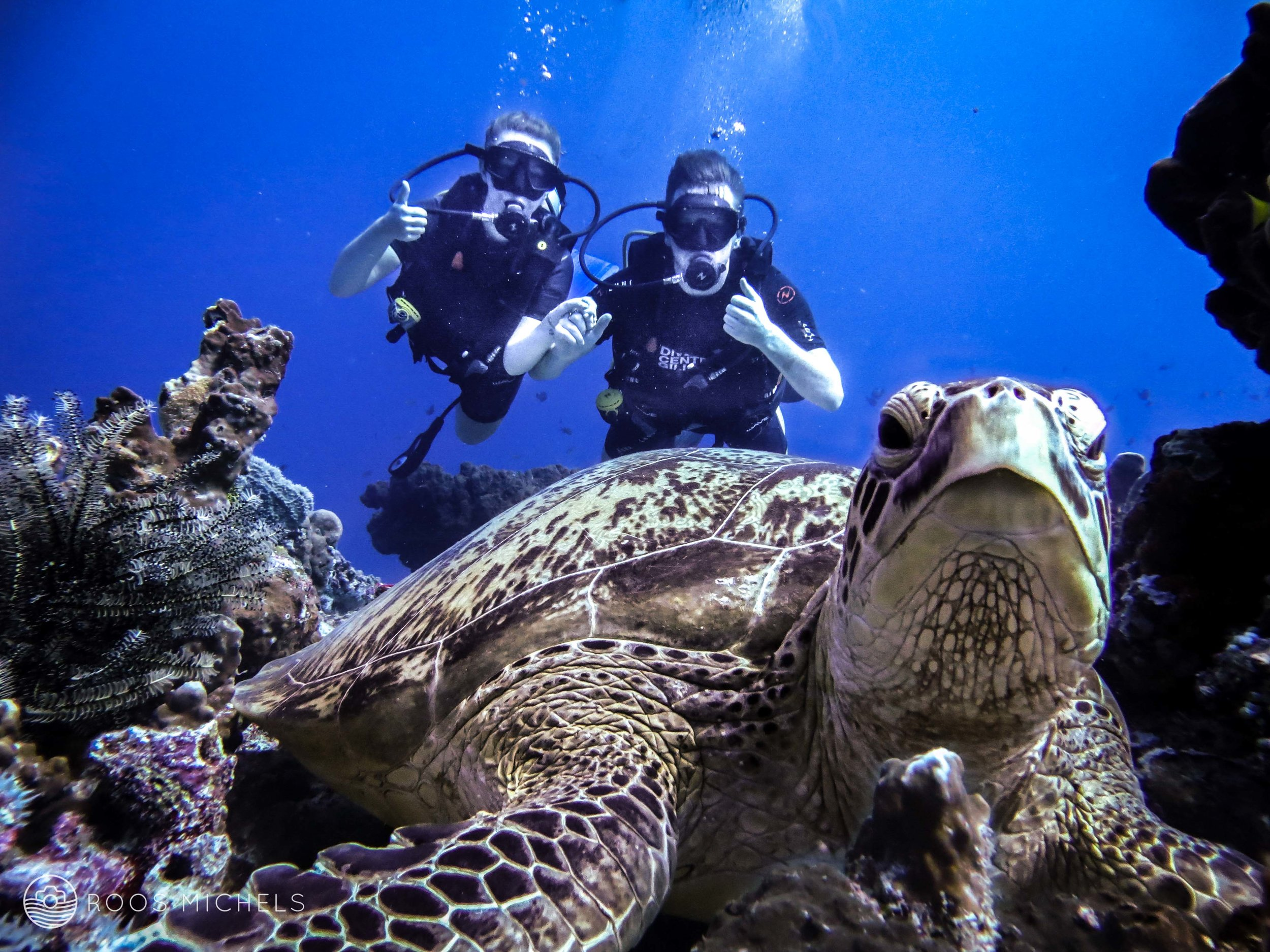 dsd.diving.indonesia.gilitrawangan