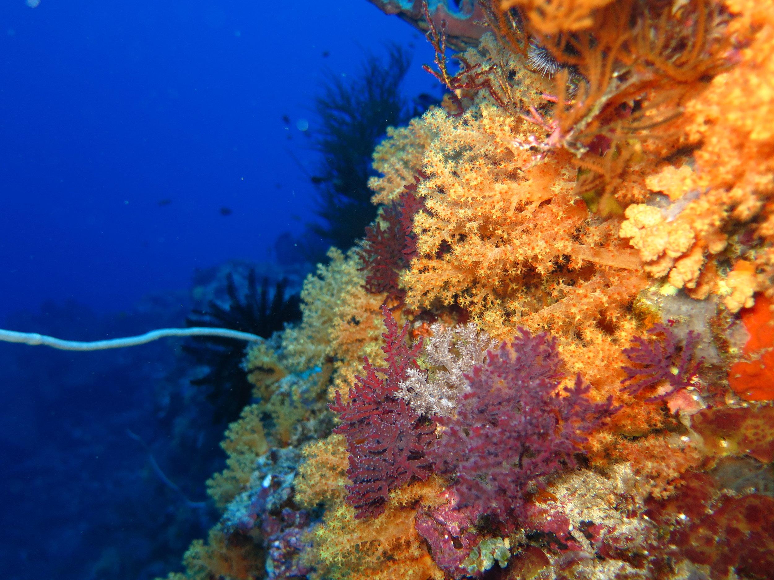 """Diving in Playa del Carmen"" Photo by Steve Willard"