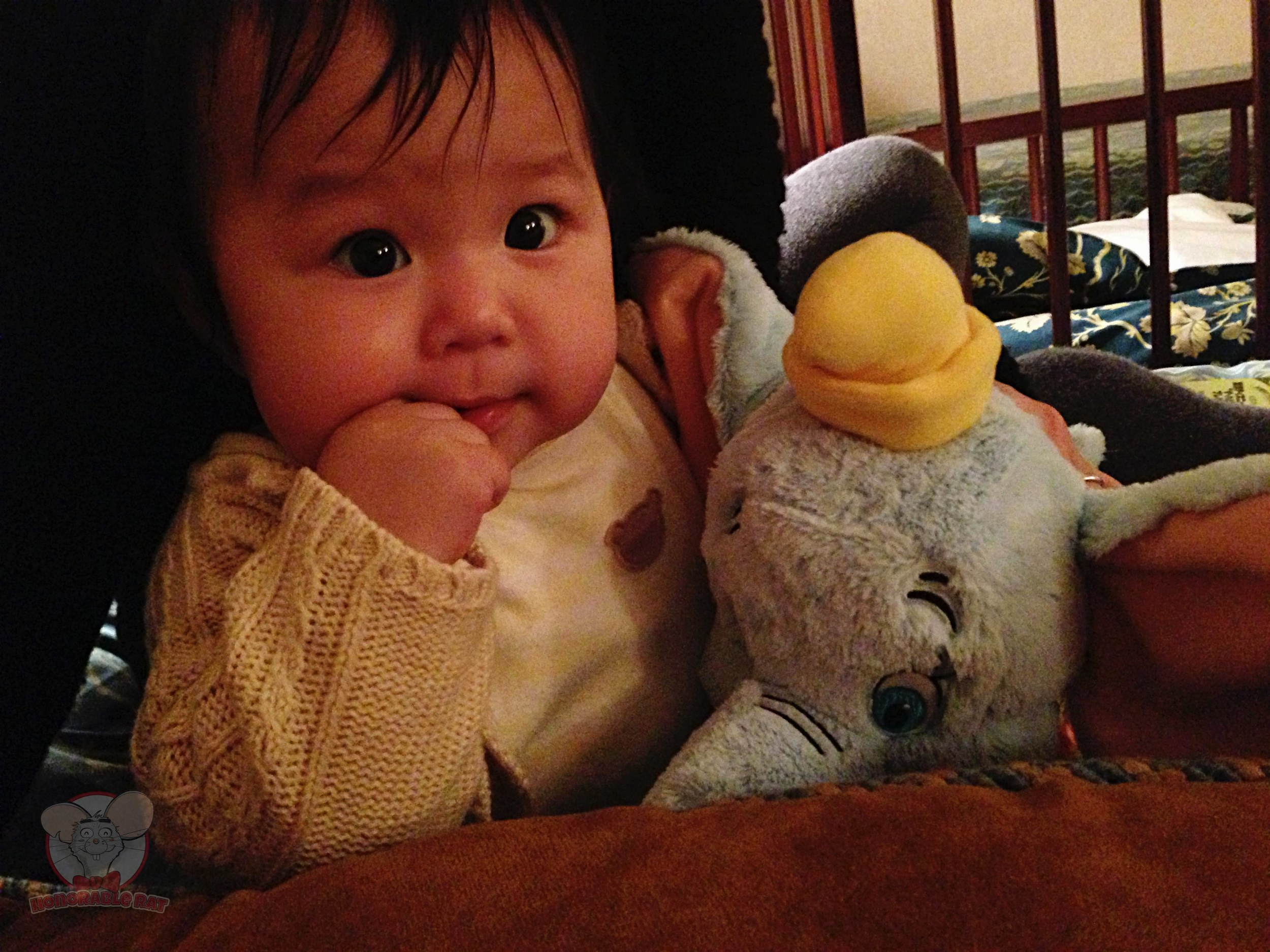 Mahina with her new Dumbo soft toy