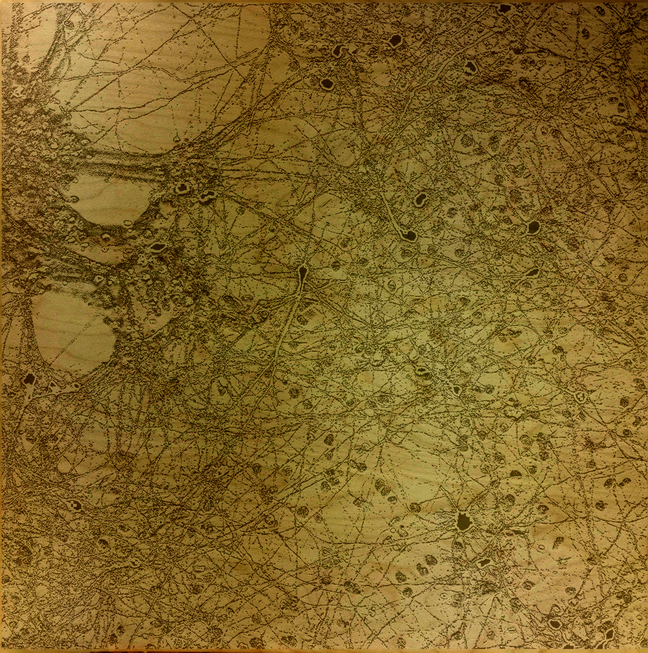 """Mapping Manhattan on Wood 1"" collaborative work by Yana Zorina and Darcy Elise Johnson, microscopy, digital media"