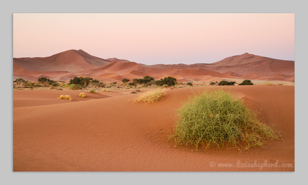 Soft pinks at dusk , Sossusvlei .  ©  Lizzie Shepherd