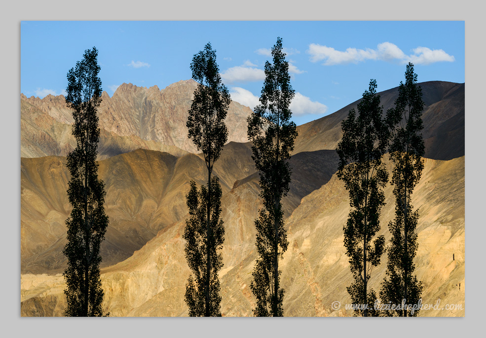 Poplar trees silhouetted against the mountain ridges of Moonland Lamaruyu. ©  Lizzie Shepherd