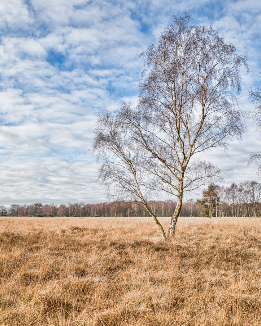 A Common Tree by Peter Bayliss :: All Rights Reserved