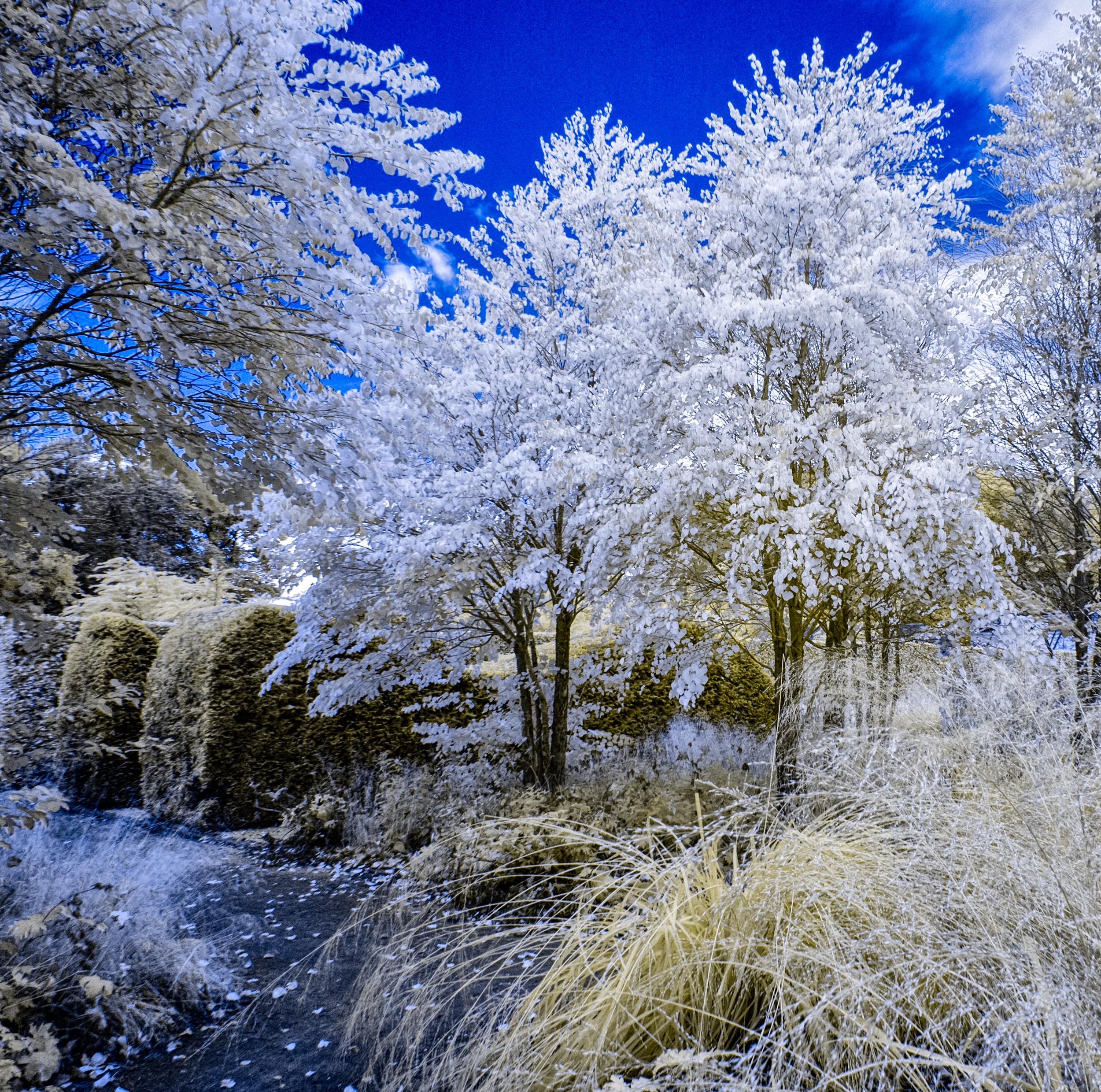 Scampston in infrared .jpg