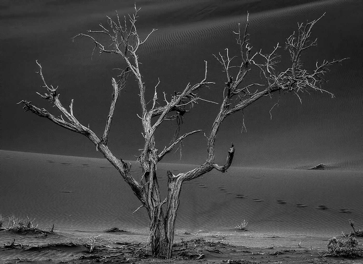 Desert Tree_Neville Turton
