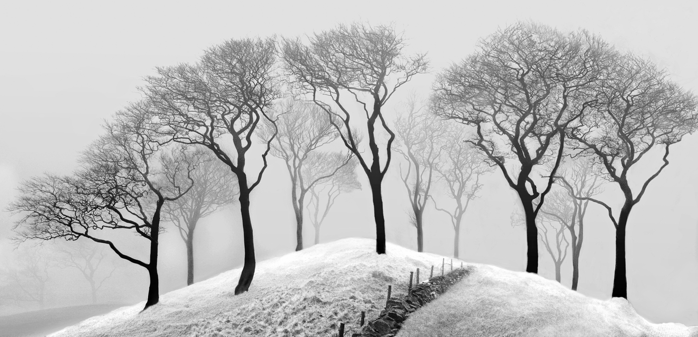 Trees in the Mist Derbyshire