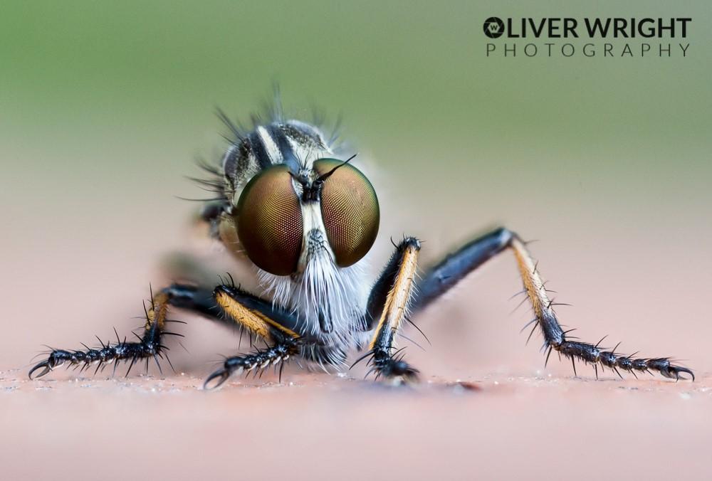 Olivr wright 1.jpg