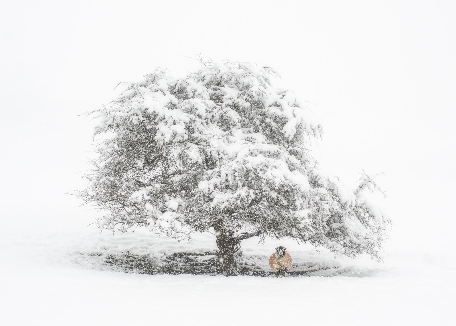 Pale Shelter.JPG