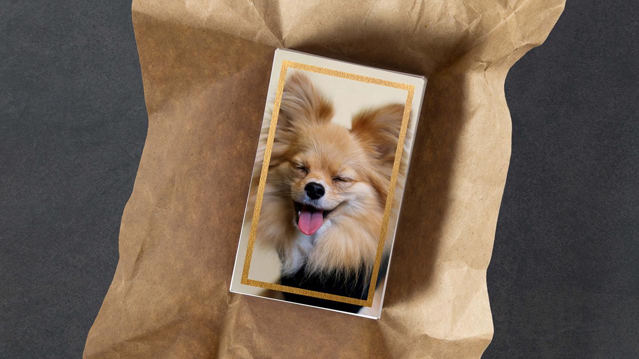 Sparkles the Dog - Branding, Packaging, Social