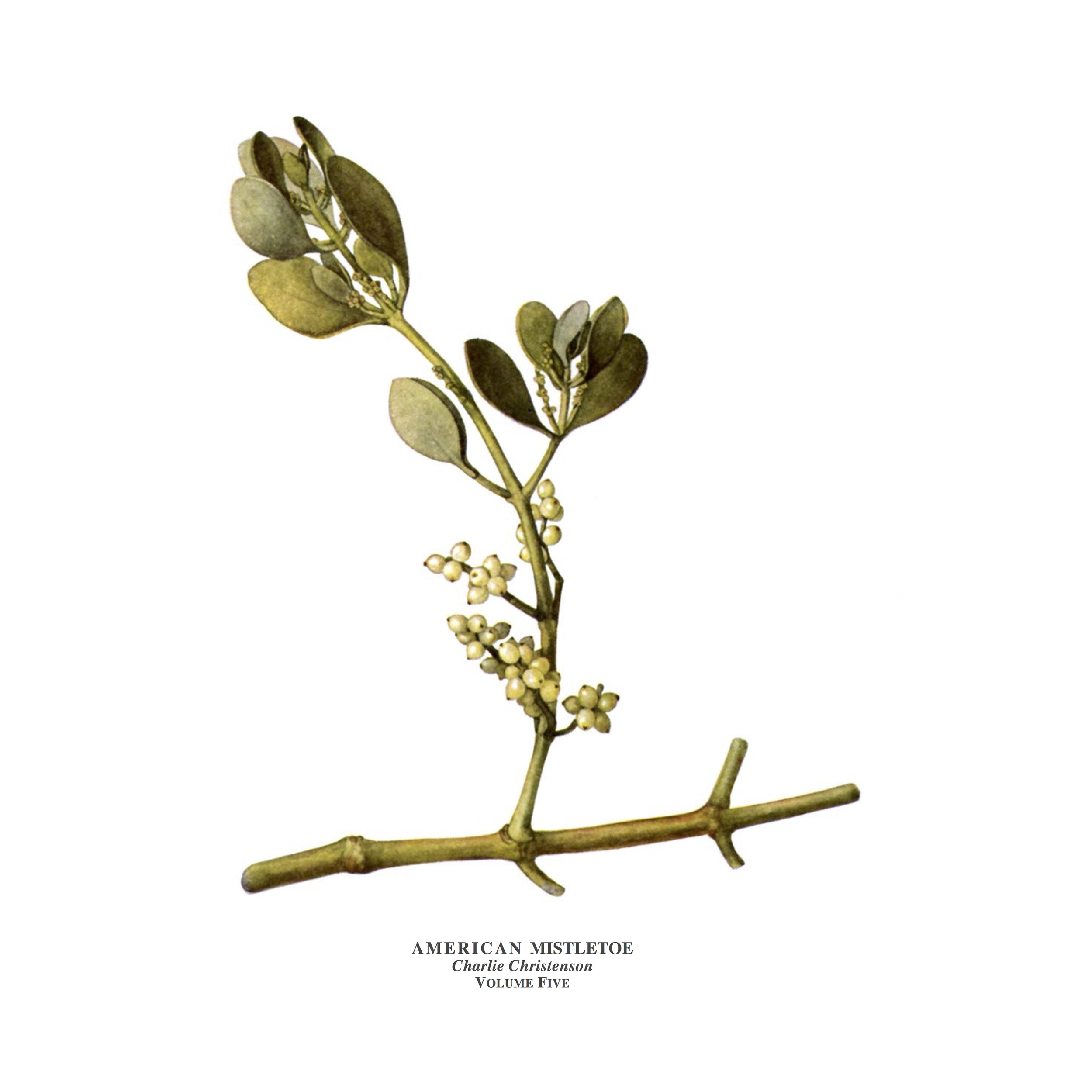 American Mistletoe Cover.jpg