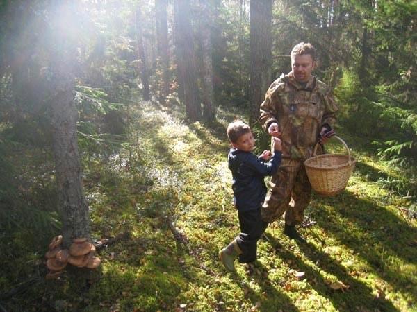 с детьми на прогулку в лес за грибами