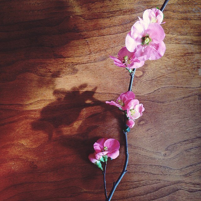 Pretty little backyard blooms. @lauraflippen #flowers #beautifulblooms #backyard #emissaryartists #lauraflippen 🌸🌼🌷💐🌻