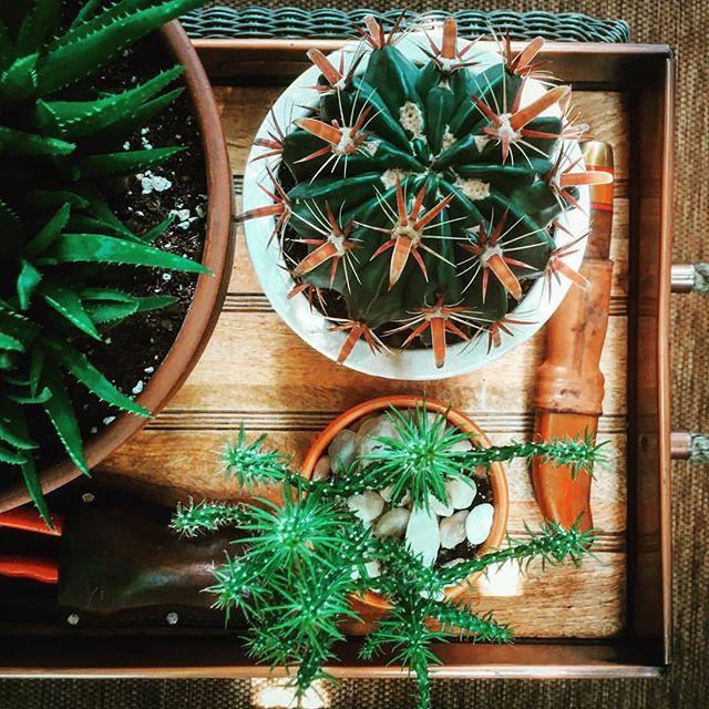 Our studio garden.🌵🎍🌵🎍@nateluken #springpatch #succulents #studio #emissaryartists #nateluke