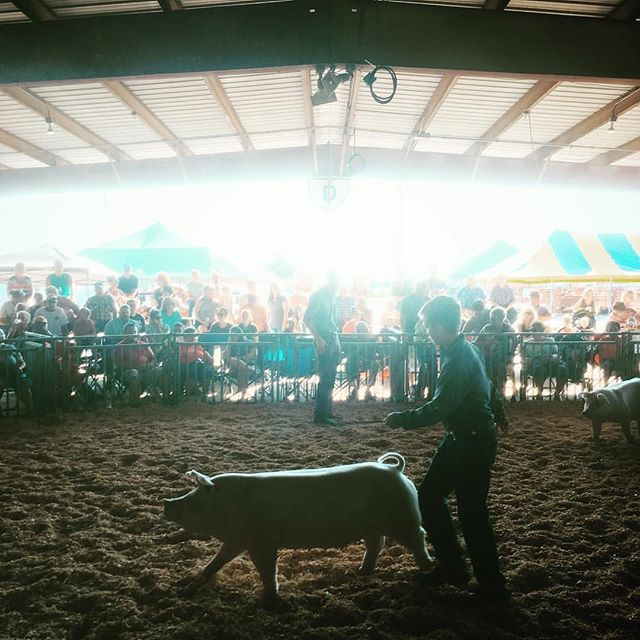 We love state fairs! This is from Illinois. 🐷 Have a great weekend! @nateluke #illinois #statefair #pig #emissaryartists #nateluke