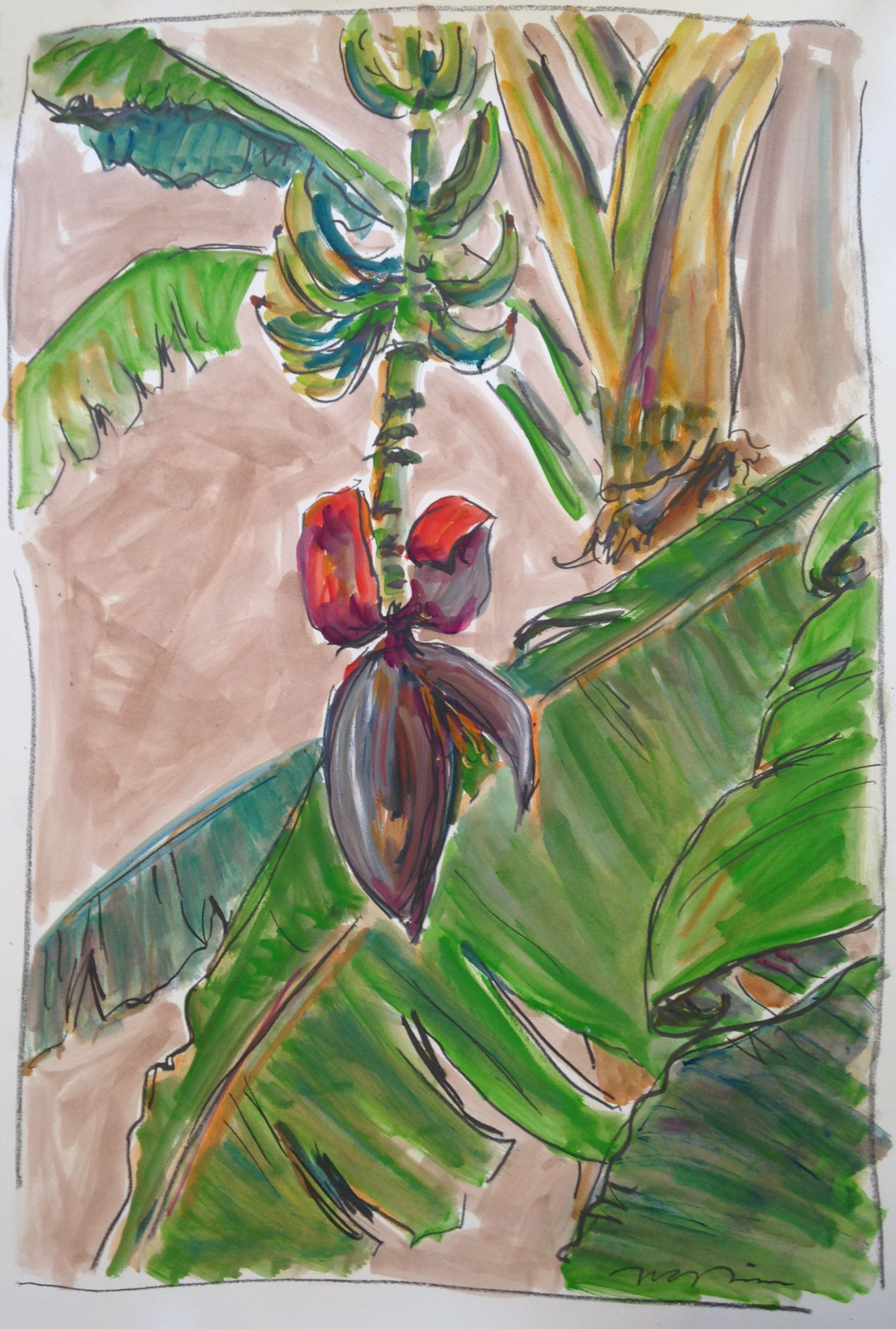 """""""Banana Flower"""" by Tim Trapolin, graphite, oil, and oil wash on French paper, 30""""X44"""", value: $4,200 (Donated in honor of Louise Martin & Camille Strachan)"""