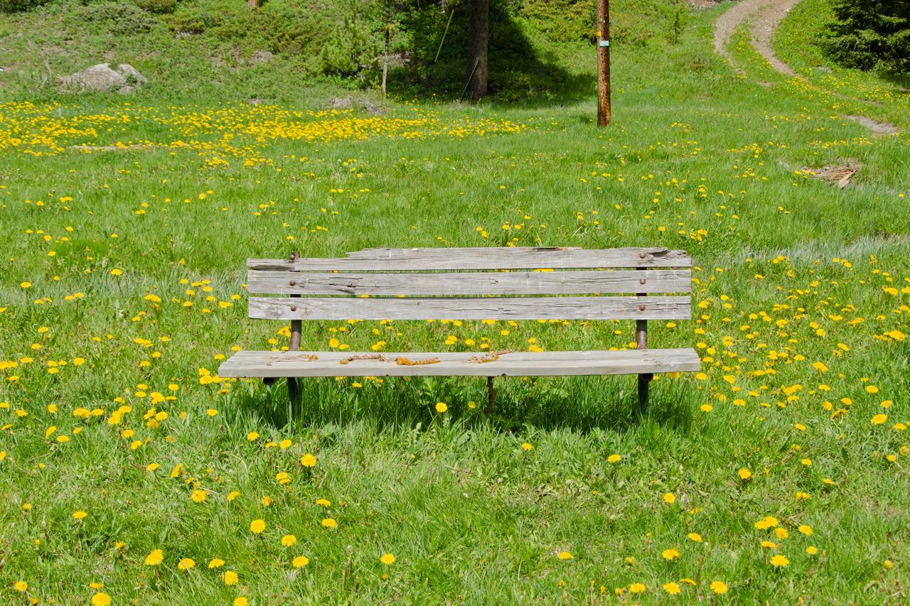 Dandelion Bench