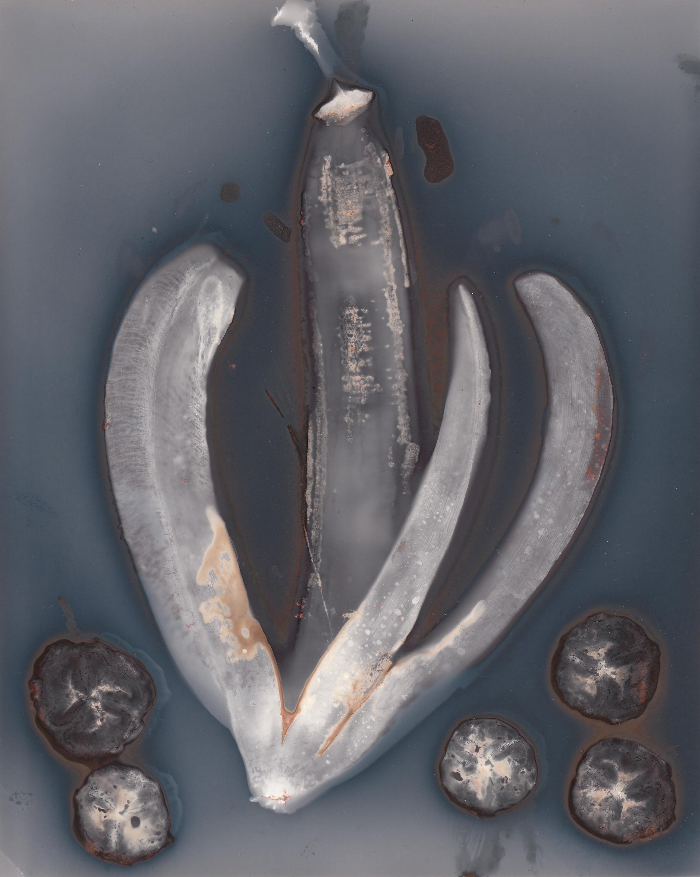 Banana Peel & Slices