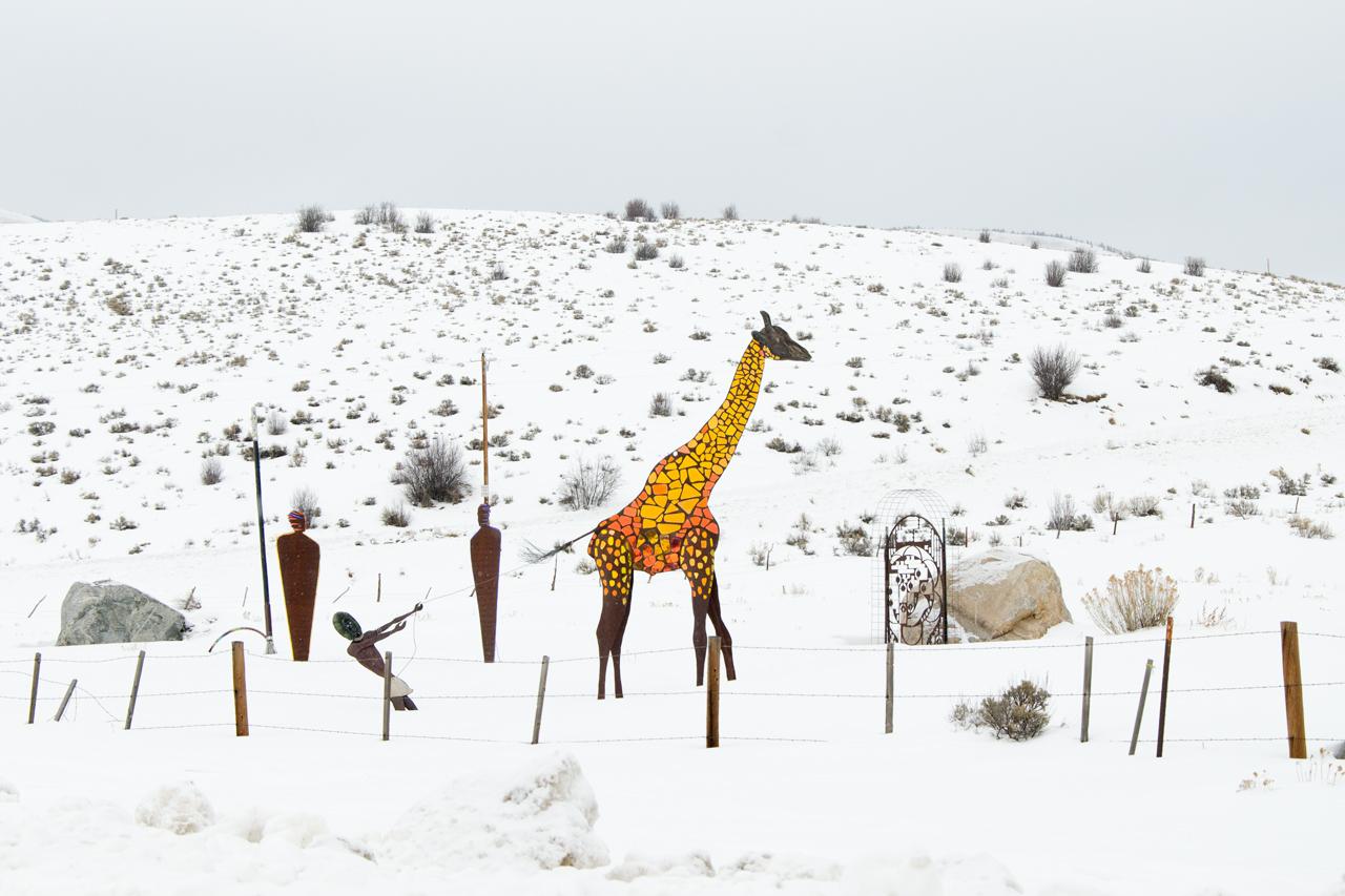 Winter Safari