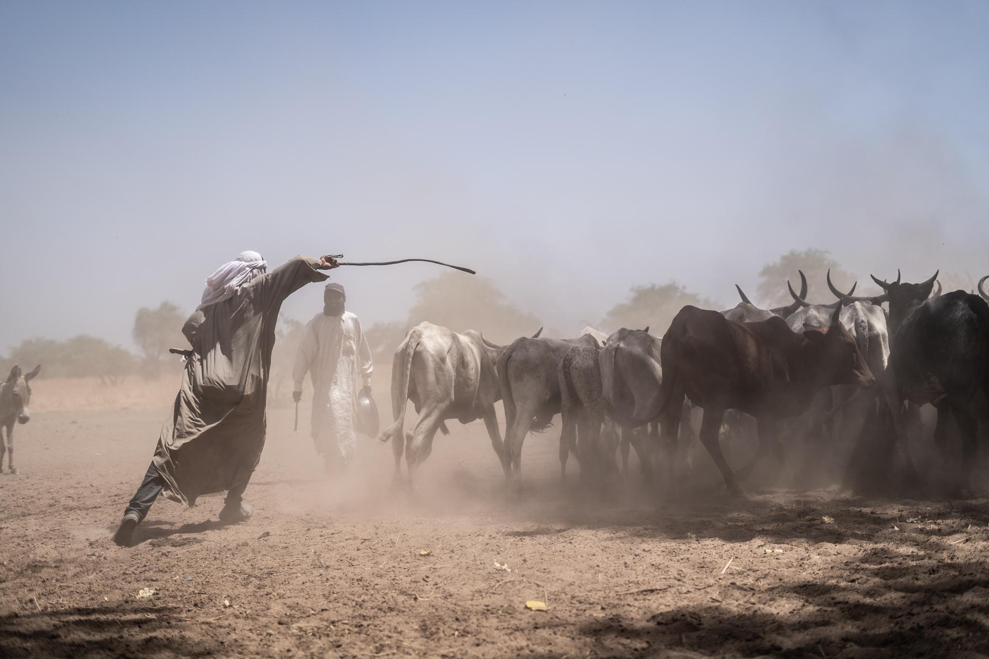 MSF Chad - Day 4 -45_20190405.jpg