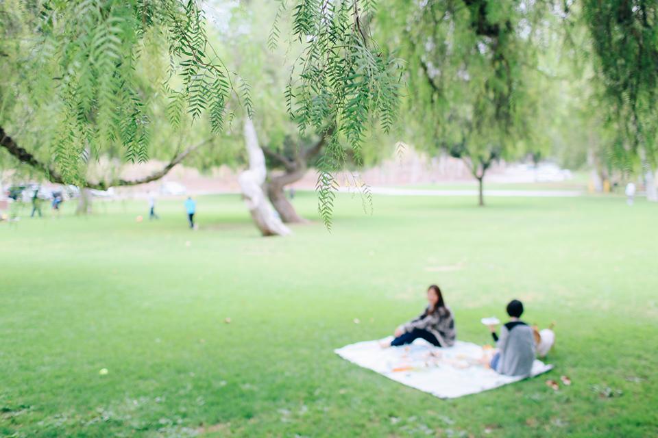 picnic_45