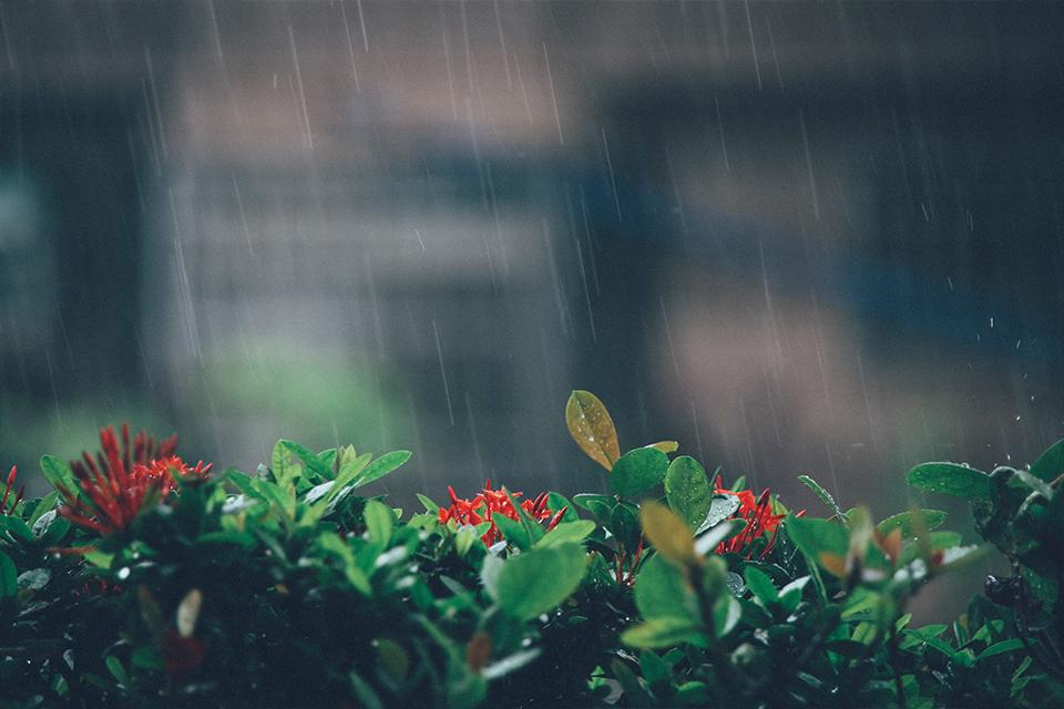 攝影photography◥ pouring rain in taiwan // 久違的台灣大雨
