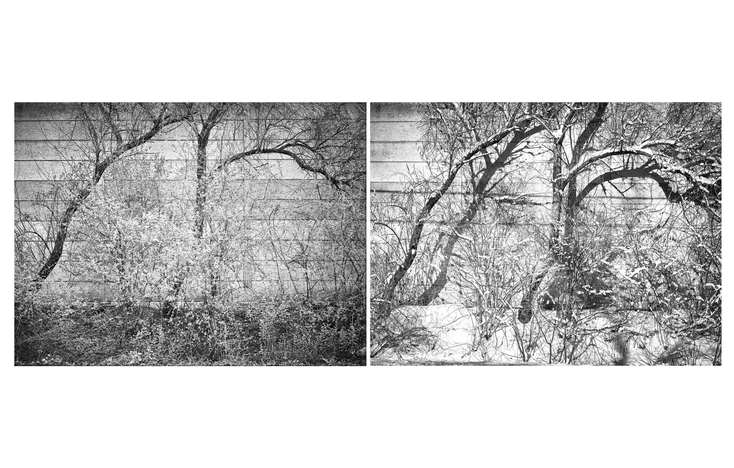 Mississauga Shrubs Spring-Winter Diptych 2016