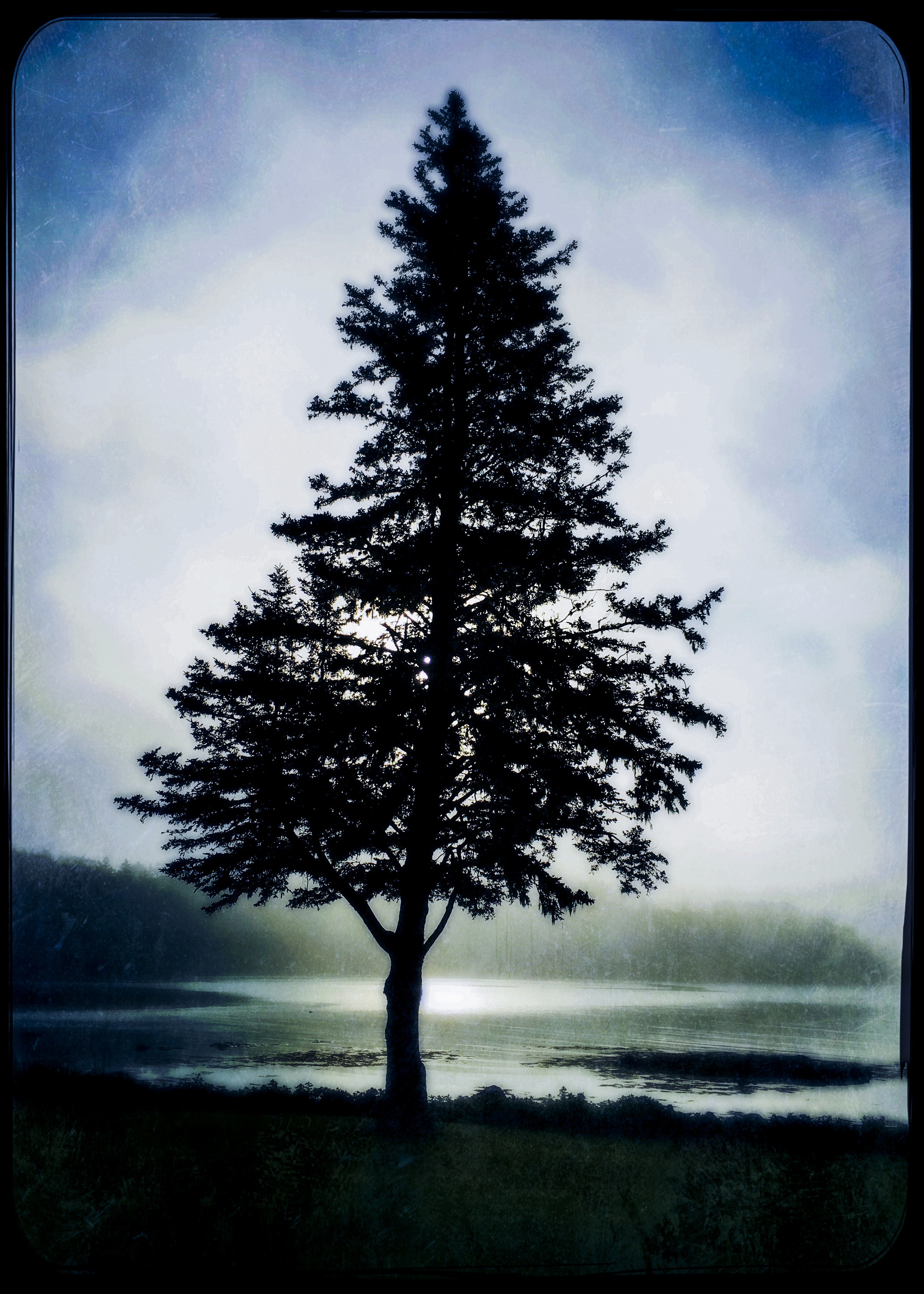 Crooked Tree. This is Maine.