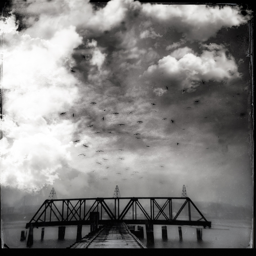 Birds Over Bridge