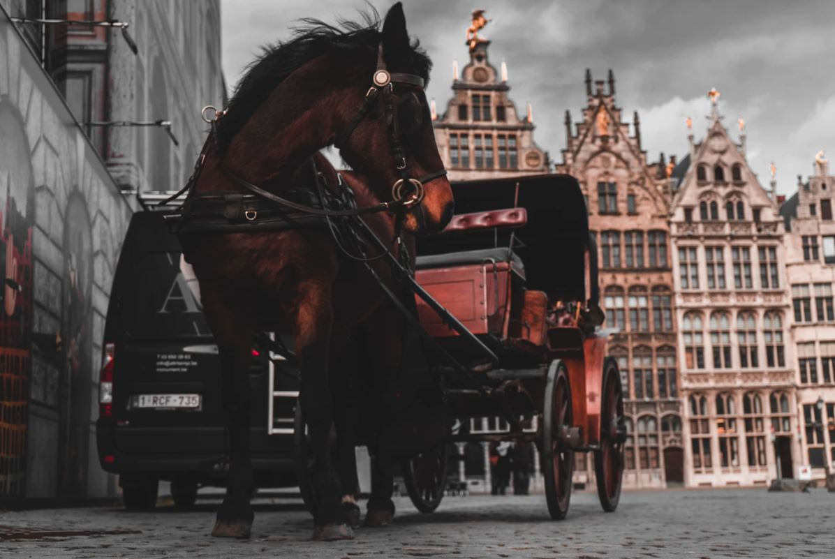 Carriage Horse  Photo Credit: Jonas Jaeken
