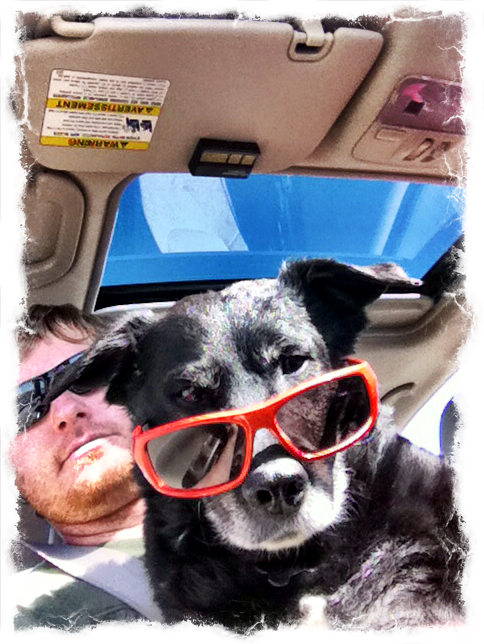 1-cool-dog-sunglasses-ezilstein.JPG