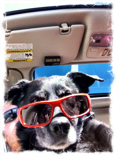2-cool-dog-sunglasses-ezilstein.JPG