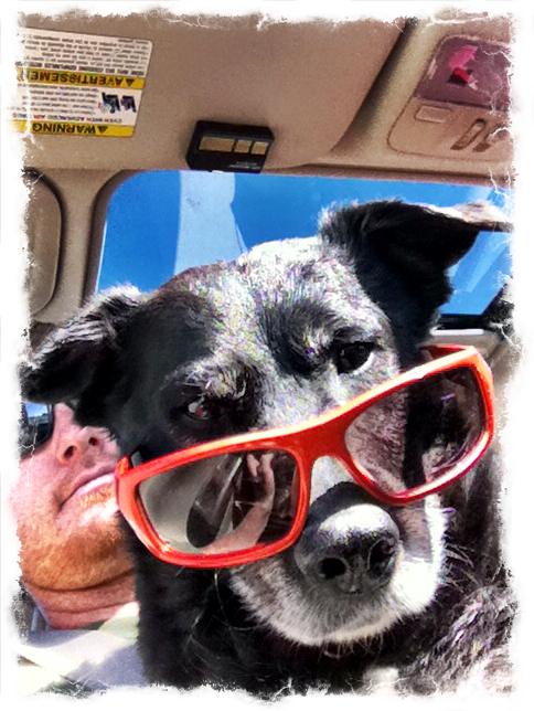 3-cool-dog-sunglasses-ezilstein.JPG