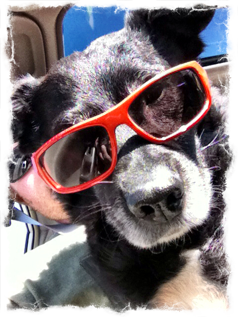 5-cool-dog-sunglasses-ezilstein.JPG
