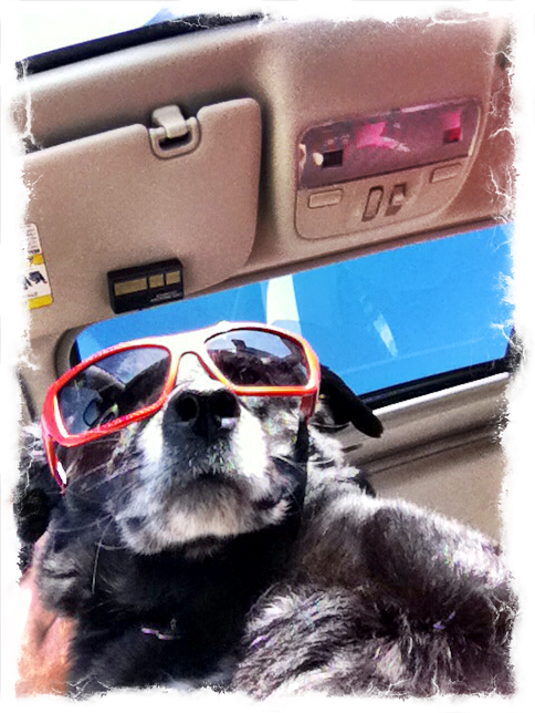 7-cool-dog-sunglasses-ezilstein.JPG