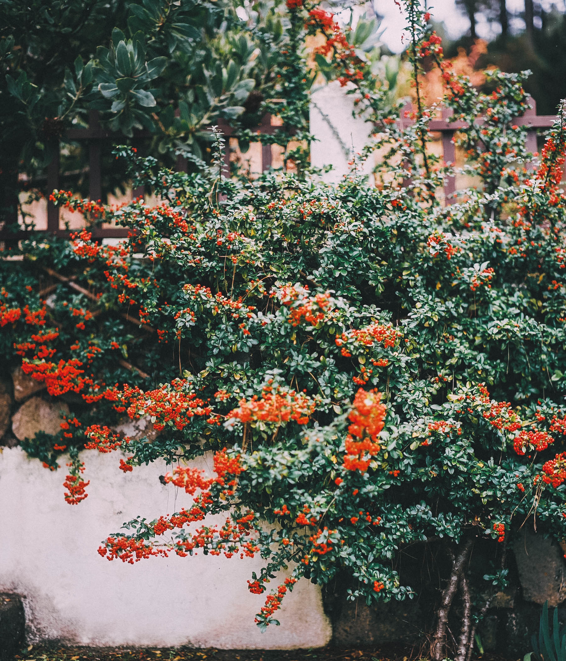 0baraba_0Baraba-R8-E163.jpg