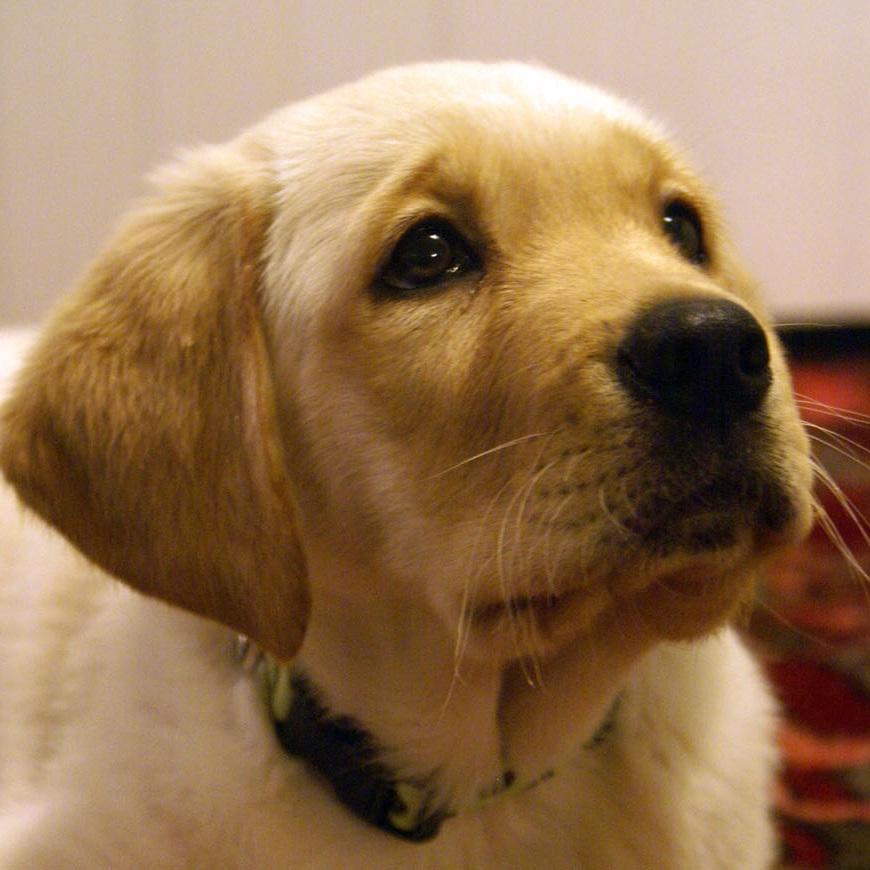 Sophie puppy.JPG