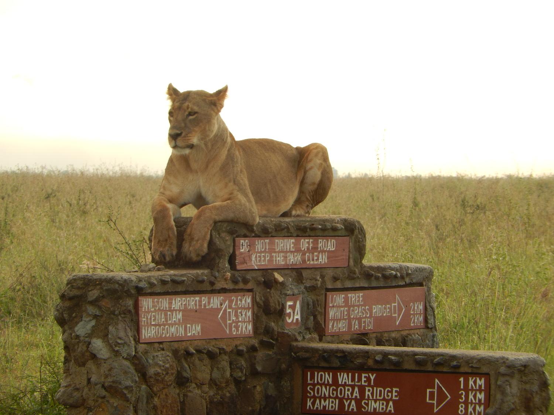 Great Safari Experience.