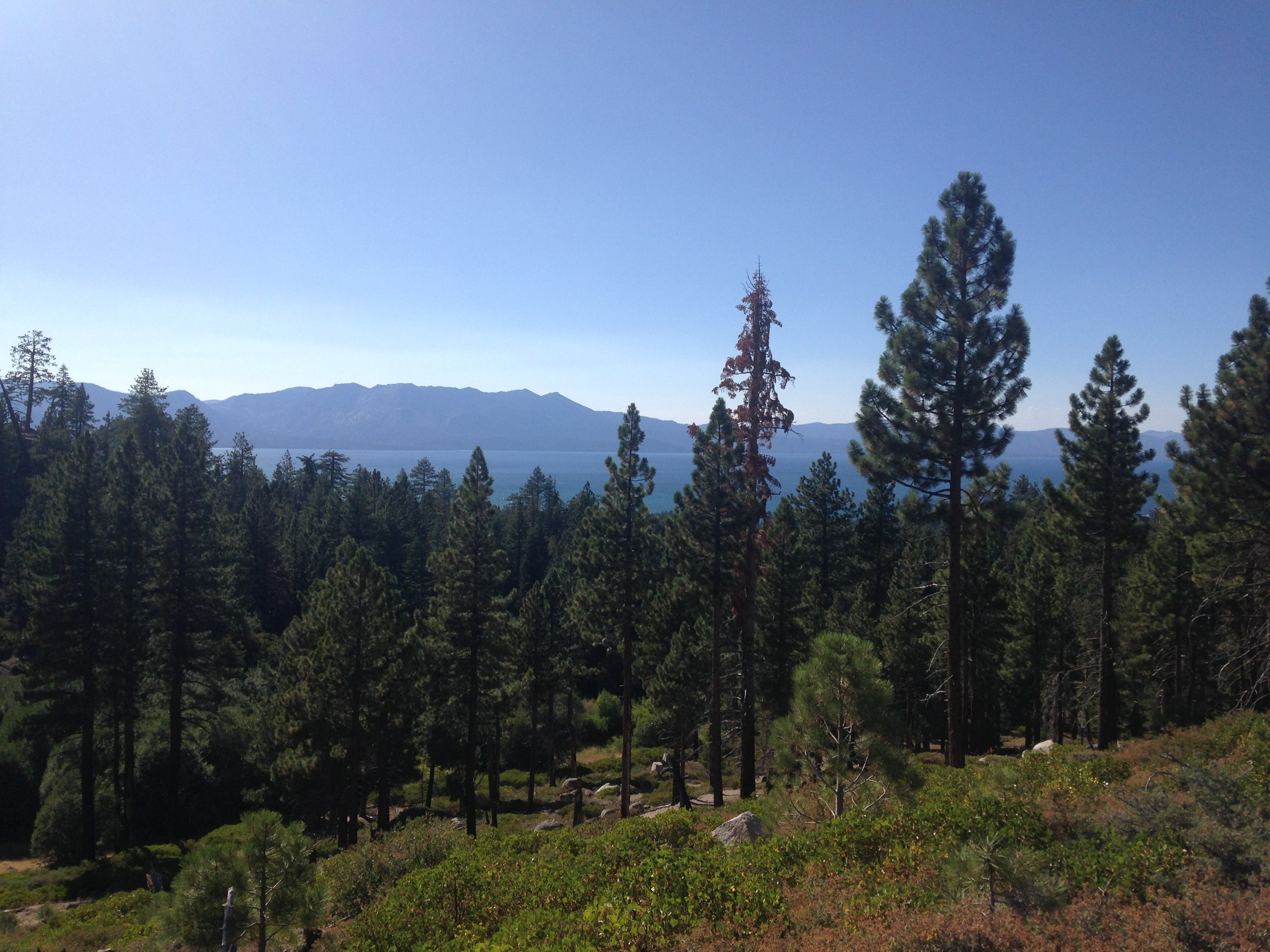 View of Lake Tahoe, CA. from the running/hiking trails.