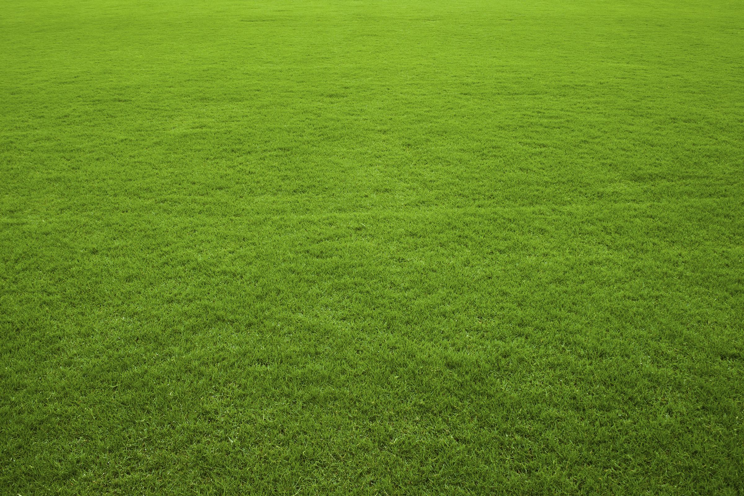bg-grass.jpg
