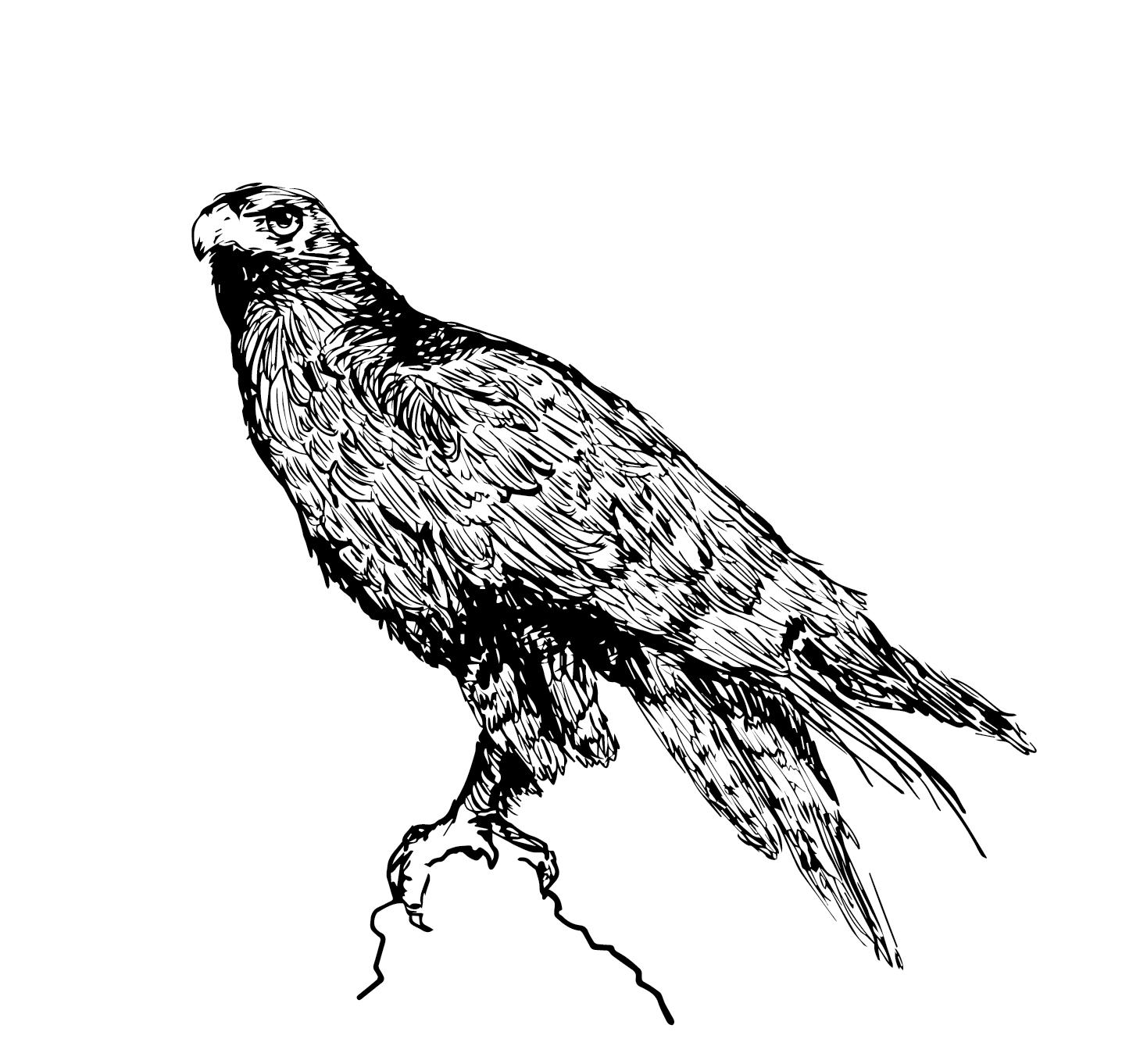Hawkvector.png