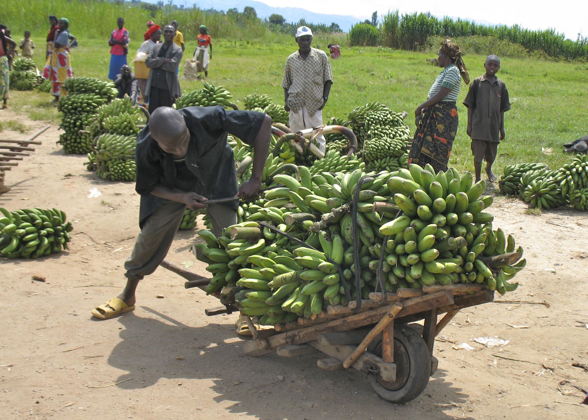 man with bananas on cart.jpg