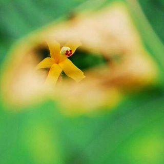 Not the usual... #BRNO #baLens, #baLenscap #customwhitebalance #BRNOstore.com #betterphotography #betterphotos #color #flowers #naturephotography #nature #framed #flower