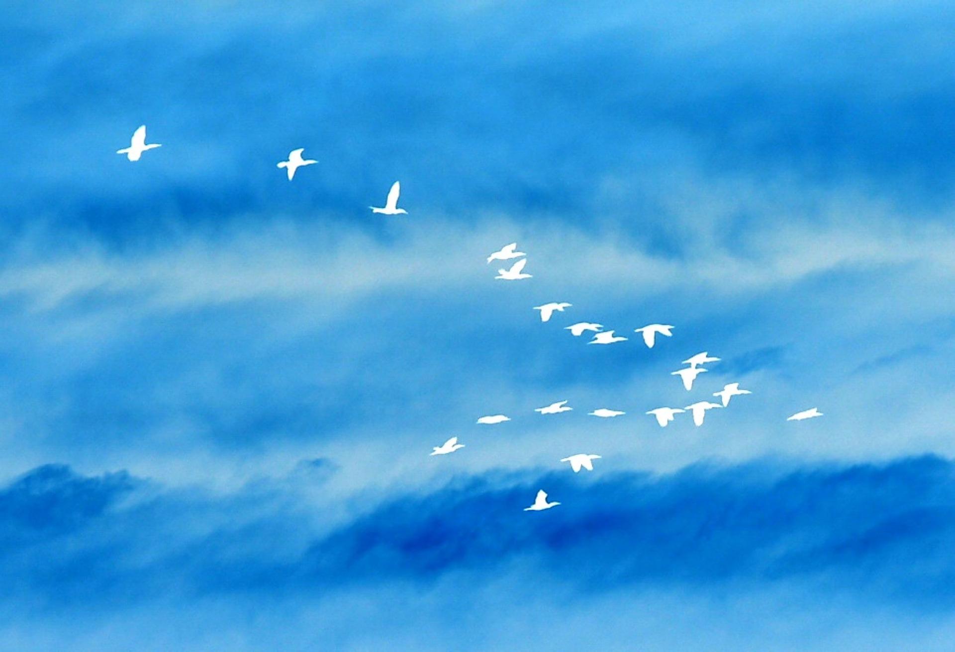birds-707348_1920.jpg