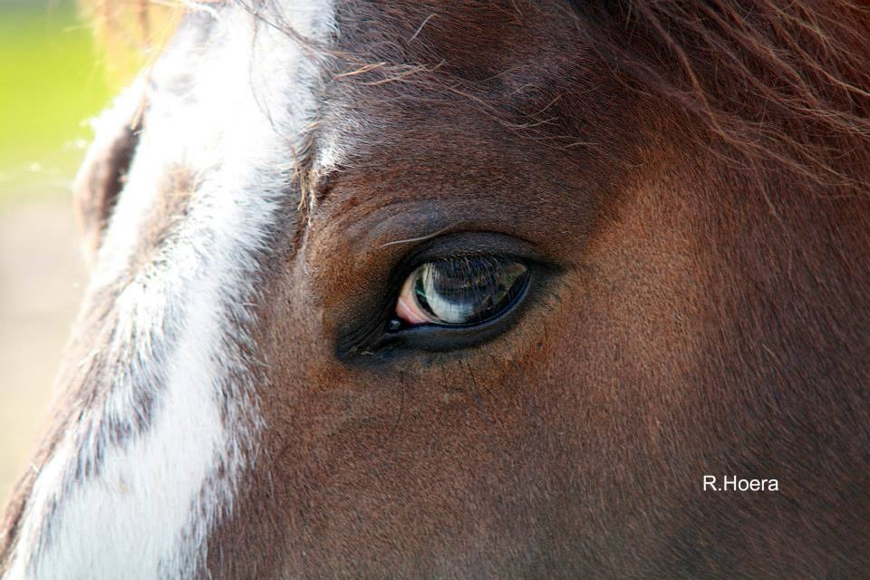 One of my favorite picture of my mare Sassy - taken by my brother. I lost her in April of 2016 - her spirit still strong but her body finally needed to move on. She was one of my greatest teachers because she was always clear about what worked or didn't.